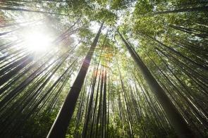 bamboo-364112_1920